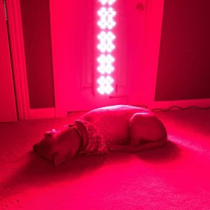 red light therapy for dogs